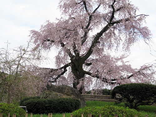 IMG_6876丸山公園-s.png
