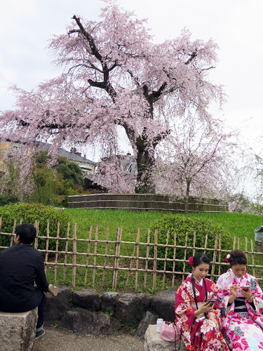 IMG_6882丸山公園-s.png