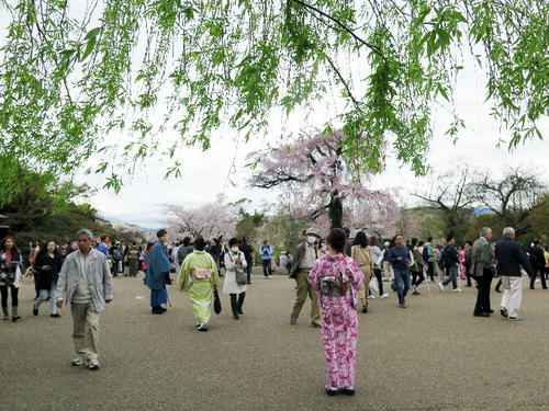 IMG_6885丸山公園-s.png
