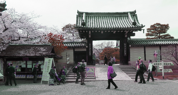 IMG_6993仁和寺-s.png