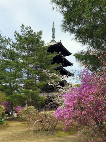 IMG_6999仁和寺-s.png