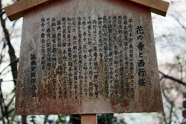 IMG_8233花の寺と西行桜-s.png